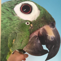 Sound absorber with parrot and a parrot - Tobias in Stockholm